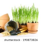 green grass in flowerpots and... | Shutterstock . vector #190873826