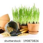 green grass in flowerpots and... | Shutterstock . vector #190873826