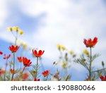 red wildflowers in the graden.   Shutterstock . vector #190880066