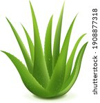 realistic illustration of aloe... | Shutterstock .eps vector #1908877318