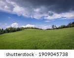 Green Meadow In Klastorisko In...