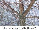 Beautiful Elm Tree Photographed ...