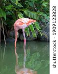 A Pink Flamingo Fishing With...