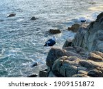 Two Seagulls On High Rocks By...