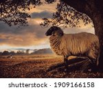 Flock Drenthe Heath Sheep...