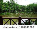 Biodiversity Of Flamingo Pond...