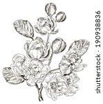 sketch of branch of spring... | Shutterstock .eps vector #190938836