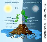 diagram of plant photosynthesis.... | Shutterstock .eps vector #1909396312