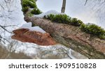 Fungus On A Tree  Polypore...