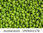 green pea background. pea pods... | Shutterstock . vector #1909641178