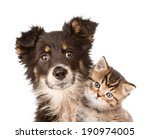 Stock photo closeup puppy dog and kitten together isolated on white background 190974005