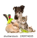 Stock photo large group of animals isolated on white background 190974035