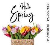 Beautiful Tulip Flowers In...