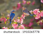 Two birds with beautiful...
