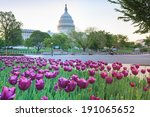 Tulips Surround The Us Capitol...