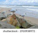 Seagulls Standing On Rock Near...