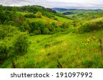 mountain summer landscape. trees near meadow on hillside under  sky with clouds - stock photo