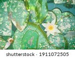 Flat Lay Of Water Lily...