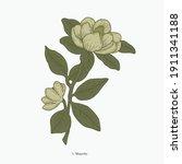 vintage hand drawn scientific... | Shutterstock .eps vector #1911341188