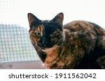 An Adorable Tortoiseshell Cat...