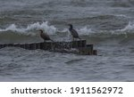 Two Black Cormorants Sitting On ...