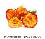 Bunch Of Rosy Roses Isolated On ...