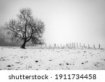 A Lone Tree In Field Of Snow  A ...