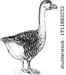 goose. collection of farm...   Shutterstock .eps vector #1911883252