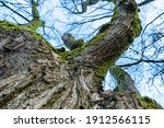 Leafless Tree In The Park With...