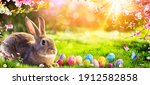 Easter   Cute Bunny In Sunny...