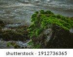 Green Sea Grass On Rocks On An...