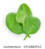 Baby Spinach Leaves Isolated On ...