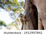 Close Up Little Squirrel Brown...