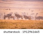 Herd of gnus and wildebeests in ...