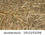 Stubble And Straw Stacks...