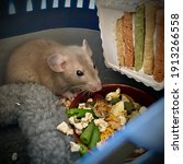 A Little Rat Sits In A House In ...