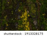 Tree Bark With Moss And Lichen...