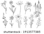wild flowers set. hand drawn... | Shutterstock .eps vector #1913577385