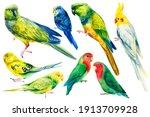 Set Of Tropical Parrots...
