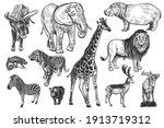 animals of wildlife set. lion ... | Shutterstock .eps vector #1913719312