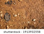 wet ground  yellow soil and... | Shutterstock . vector #1913932558