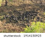 Kakadu National Park Northern...