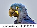 Blue Bird Largest Parrot...