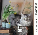 Grey Cat On Vintage Suitcase...