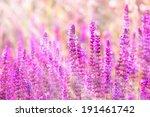 Meadow Flowers  Purple Flowers...