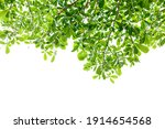 green leaf isolated on white... | Shutterstock . vector #1914654568