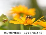 Bee And Flower. Close Up Of A...