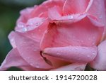 Macro Closeup Photo Of Droplets ...