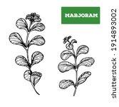 marjoram hand drawn... | Shutterstock . vector #1914893002