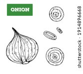 onion hand drawn illustration.... | Shutterstock . vector #1914896668